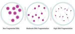 SpermDNAFragmentationTest
